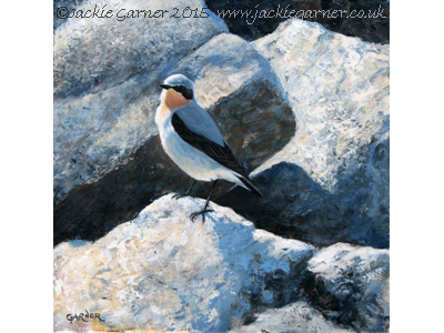 Contrasts - acrylic painting of a Wheatear