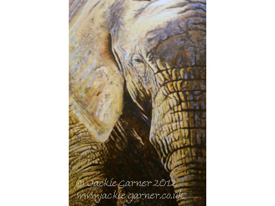 African Elephant, painting in Acrylics by wildlife artist Jackie Garner