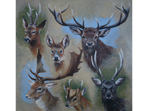 Six British Deer painting in acrylics