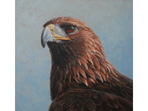 Acrylic painting of Golden Eagle