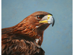 Acrylic painting of Golden Eagle II