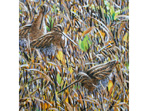 'Stubble and Snipe' painting with acrylics