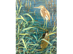 Acrylic painting of Squacco heron