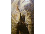 'The Eye of the Beholder' Acrylic painting of African Elephant
