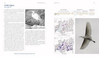 Little Egret pages from 'The Birds of Gloucestershire'