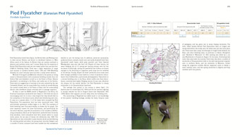 Pied Flycatcher pages from 'The Birds of Gloucestershire'