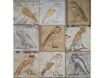 Link to large image of Owls of Ancient Egypt
