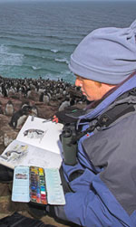 Sketching penguins in the Falklands