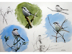 Sketch of Great Grey Shrike
