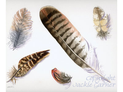 Watercolour of feather studies