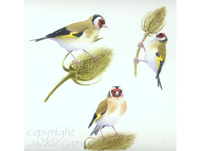 Watercolour of Goldfinches