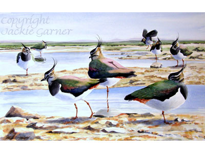 Watercolour of Lapwings