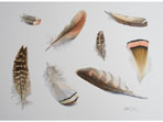Watercolour of Feather Studies V