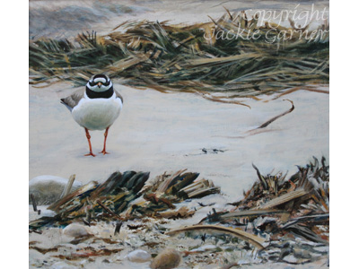 Acrylic painting Ringed Plover