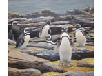 Acrylics painting of Magellenic Penguins