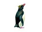 Rockhopper penguin painting